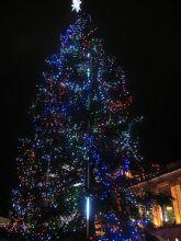 Christmas lights setup by Your Tree Doctor