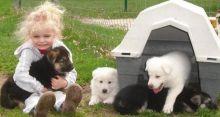 Sweet-tempered German shepherd puppies . .Txt only via (786) 322-6546