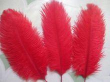 Cute Ostrich Feathers