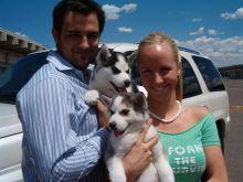 Beautiful Male and female Siberian husky puppies blue eyes