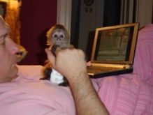 Beautiful Capuchin Monkey for Adoption Text (819) 412-1240 Image eClassifieds4u 2