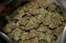 Grade A+++ Kush / Medicinal Marijuana Strains for sale