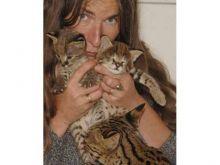F2 Savannah female kitten l Image eClassifieds4u 1