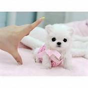 Adorable Pomeranian Teacup Puppies(607)431-8064