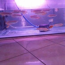 Super Red Arowana fish and many others for sale. Call Or Send text with your orders to (253) 470-817