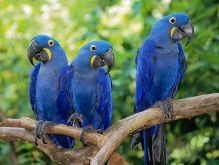 Re-Home Beautiful and Talking Hahns Macaw Ready Now Image eClassifieds4U