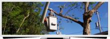 Davis Tree Service Image eClassifieds4u 3
