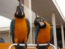 Parrots and Parrot Eggs