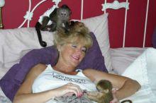 Amazing Capuchin Monkey via (252) 528-6846