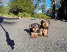 Dogs For Sale Cape Breton