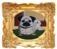 Pugs on Ranches in Kansas Image eClassifieds4u 3