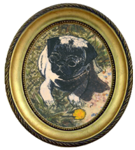 Pugs on Ranches in Kansas Image eClassifieds4u 4