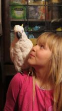 Very Friendly atoo Parrots for Sale