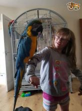 Lovely Macaw Love Kids And Dogs Extremely Clever//amandalucys1@gmail.com