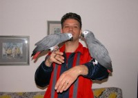Cute male and female African grey for sale//amandalucys1@gmail.com
