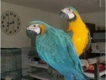 Talking Macaw babies want a new forever home.
