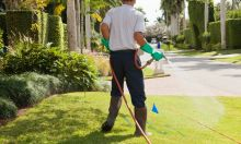 Pest and Lawn Care - What's Bugging You? Image eClassifieds4u 2