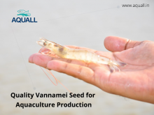 Get aquaculture seed from best sellers online in India – Aquall