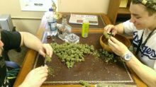 Strain for sellWe have all top quality strains at affordable prices kush Image eClassifieds4U