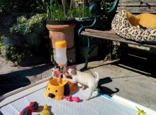 Beautifull Chihuahua Puppies looking for new homes Image eClassifieds4u 3