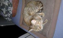 3 adorable kitties