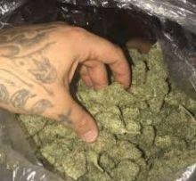 best grade marijuana