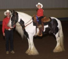 For Adoption He is a lovely Gypsy horse, and has been brought up around other horses,