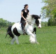 gypsy horses for adoption$1