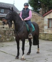 Quality Male and female Friesian Horse for sale
