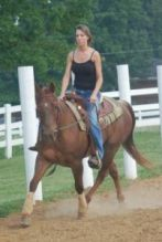 Quarter Gelding horse for sale