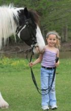 Reg. Gypsy Vanner, Mare for adoption fvc