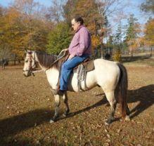 Smart & Brilliant Horse (Male and Female) For Sale (Quarter Horse)