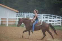 Quarter Gelding horse for sale Image eClassifieds4u 2