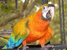 FERTILE OSTRICH AND PARROTS EGGS WITH PARROTS BIRDS AVAILABLE FOR SALE. Image eClassifieds4u 2
