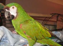 FERTILE OSTRICH AND PARROTS EGGS WITH PARROTS BIRDS AVAILABLE FOR SALE. Image eClassifieds4u 1