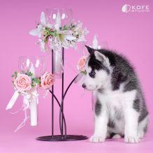 Adorable huskies for Adoption