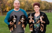 === Male/ Female Bernese Mountain Dog Puppies =