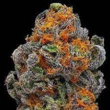 Buy 1 Oz (30g) Grand Daddy Purple Original Indica Weed Online in CANADA