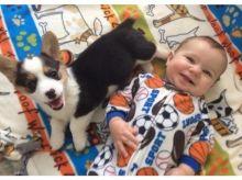 🐕🎄 Pembroke Welsh Corgi Puppies ☮ ☂ Email at us ⇛⇛ [gotze025@gmail.com ]