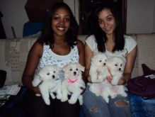 CKC registered Maltese Puppies