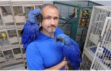 Familly Raised Hyacinth Macaw Parrots
