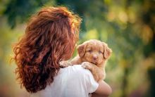 Lovely Male and Female Nova Scotia Duck Tolling Retriever Available
