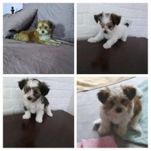 Pups ready for new home