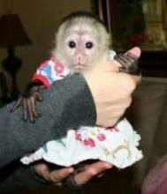 Searching for a good homes for our baby Capuchin monkeys or any.