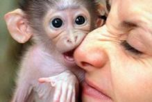 Very sweet and entertaining Capuchin Monkeys Image eClassifieds4u 1