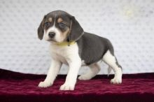 Beagle~ 1st and 2nd Shots Completed
