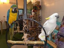 Blue & Gold Macaw parrots /Hyacinth macaw parrots /African grey & atoo parrots available now Image eClassifieds4u 3
