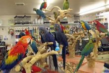 Blue & Gold Macaw parrots /Hyacinth macaw parrots /African grey & atoo parrots available now Image eClassifieds4u 1