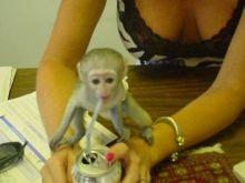 I have 2 capuchin monkeys for adoption