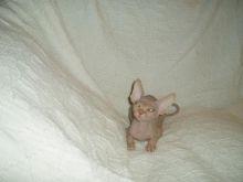Precious Canadian Sphynx kittens for adoption Image eClassifieds4u 2